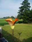 Driehoeksvogel in oranje (1)